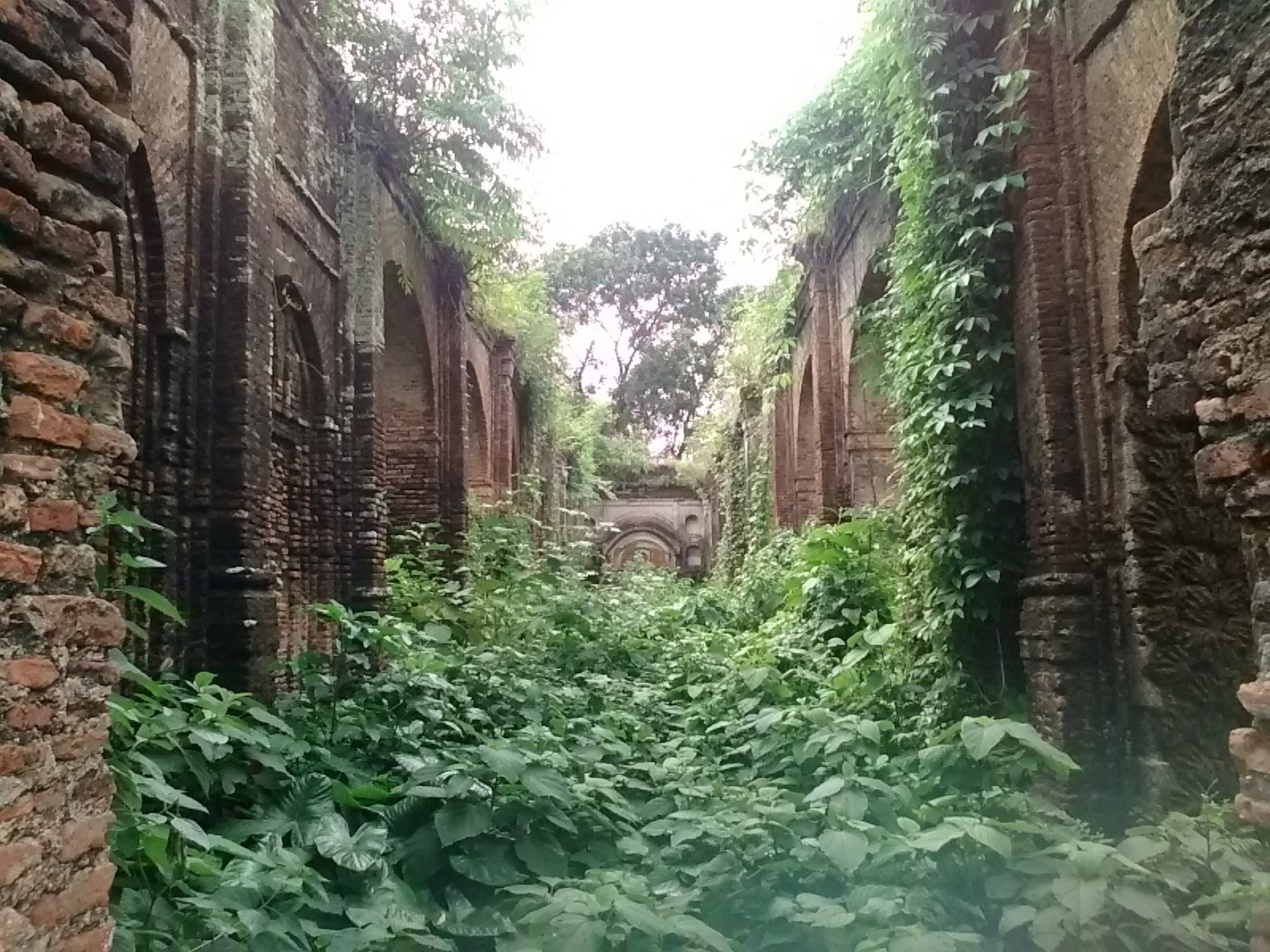 A photographs showing the ruins of the palace and temples built by Rani Bhabani, Murshidabad, partly overgrown with plants
